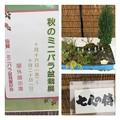 秋のミニバラ盆栽展