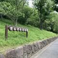 今日の散歩道・せんげんやま公園