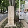 ケヤキ並木寄進の碑