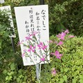 ナデシコ(撫子)