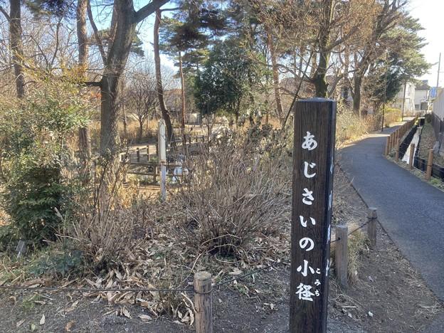 今日の散歩道
