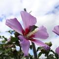 写真: 花と空