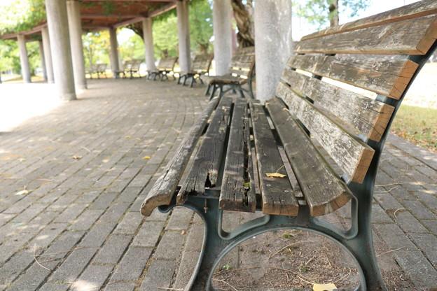 写真: 朽ちかけベンチ