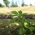 写真: 公園の葉っぱ