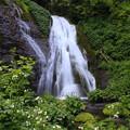 写真: 男鹿の滝とわさびの花