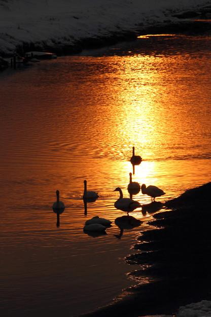 河畔の黄昏2