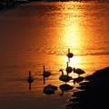 写真: 河畔の黄昏2
