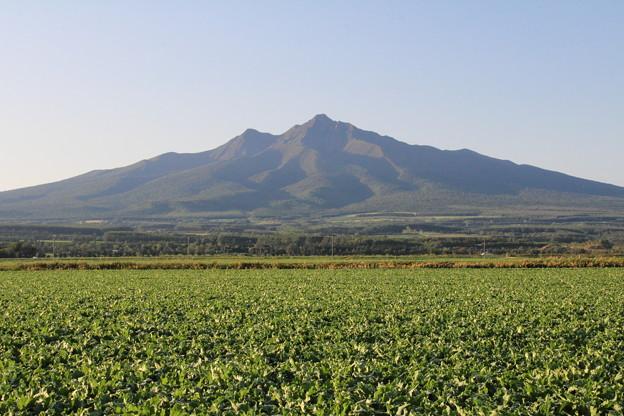 ビート畑と斜里岳