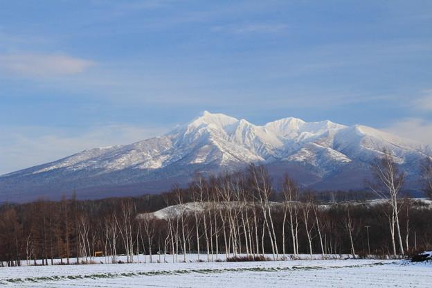 181125-2白樺と初冬の斜里岳