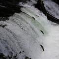 さくらの滝が旬です(^_^)v
