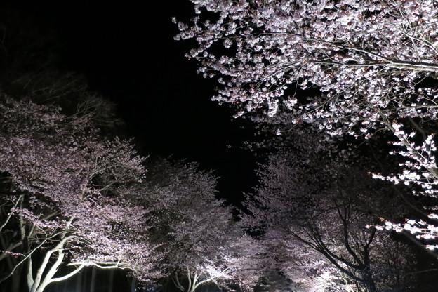 2019お花見2