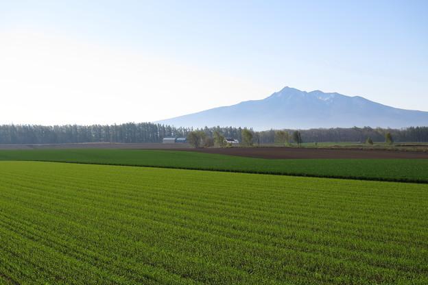春・穏やかな朝の風景2