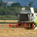 Photos: 収穫の季節02
