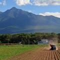 Photos: ジャガイモの収穫始まる