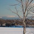 白樺に樹氷輝く朝の景色