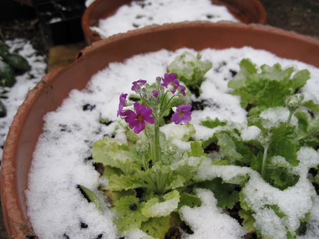 IMG_1705-雪の中