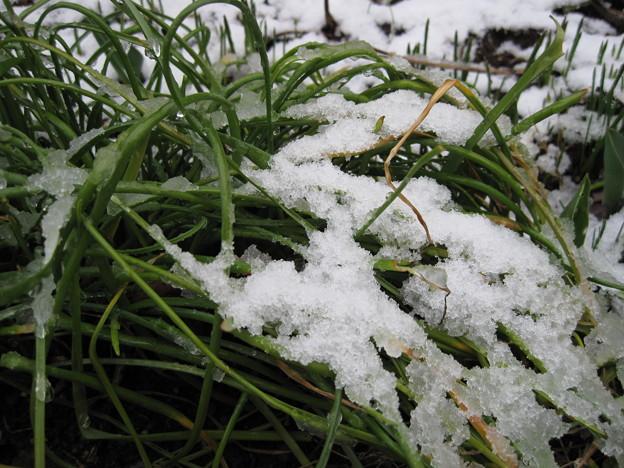 IMG_1712-初(積)雪