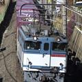 Photos: _R8A0208_SILKY 1093レ 鹿島貨物