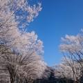 Photos: 霧氷9