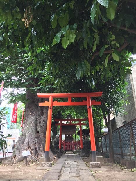 6月_豊川稲荷神社 1