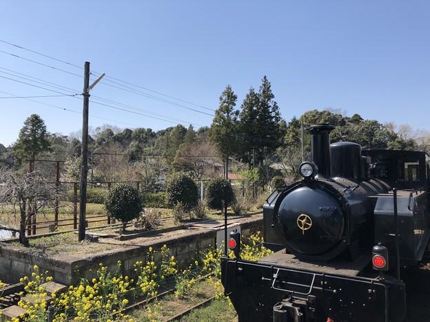 3月_小湊鐵道 1