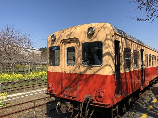 3月_小湊鐵道 5