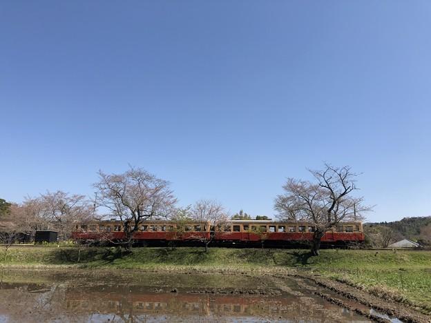 3月_小湊鐵道 6