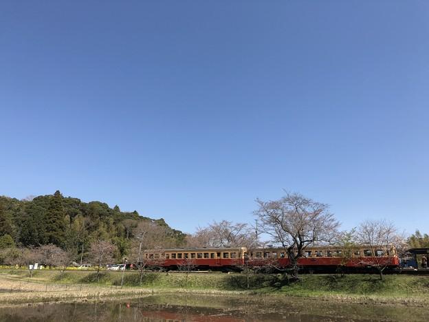 3月_小湊鐵道 7