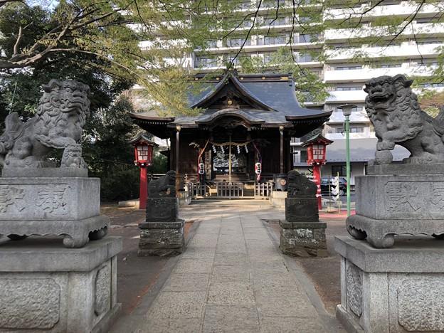 3月_江古田氷川神社 1