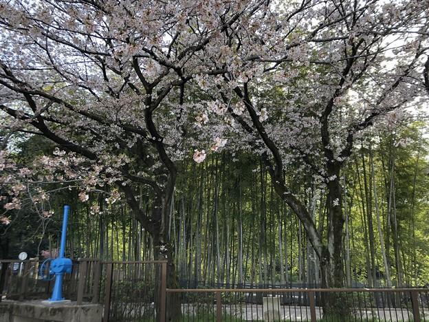 3月_江古田の森公園 1