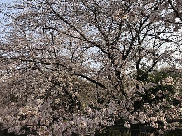 3月_江古田の森公園 2