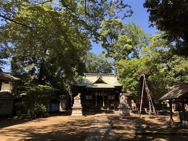 8月_氷川神社 2