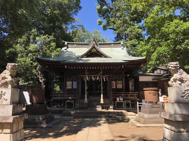 8月_氷川神社 3