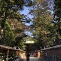 11月_鹿島神宮 f