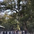 Photos: 2月_内宮 6