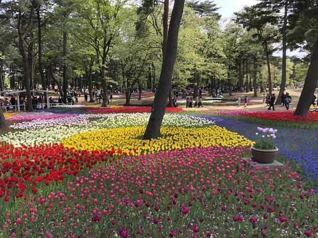 4月_国営ひたち海浜公園 j