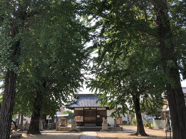 8月_天神神社 1