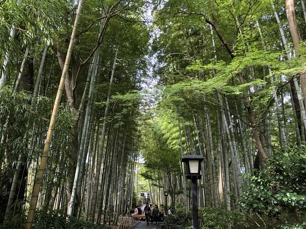 9月_竹林の小径 4