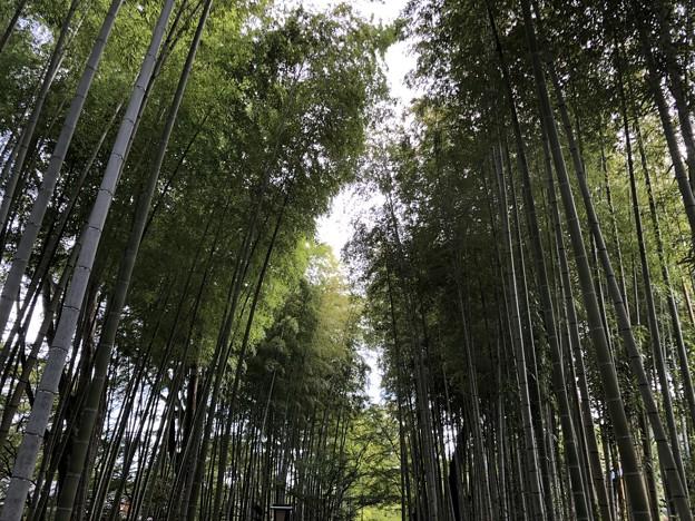 9月_竹林の小径 5