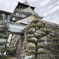 Photos: 1月_大阪城 1