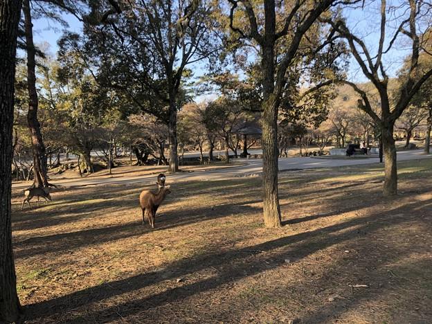3月_奈良公園 1