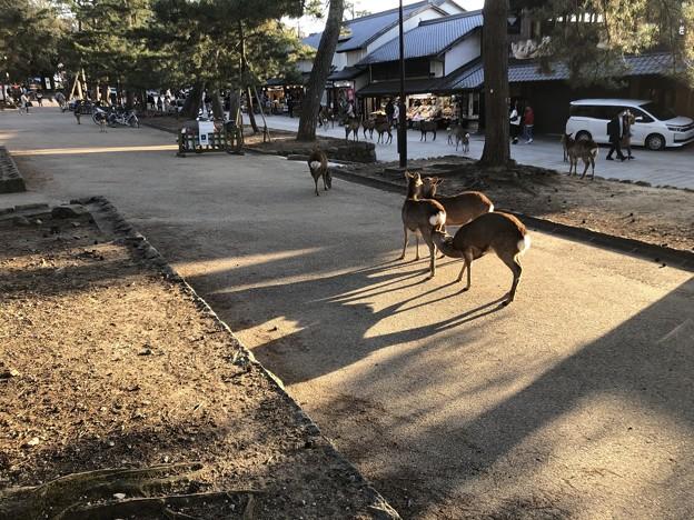 3月_奈良公園 2