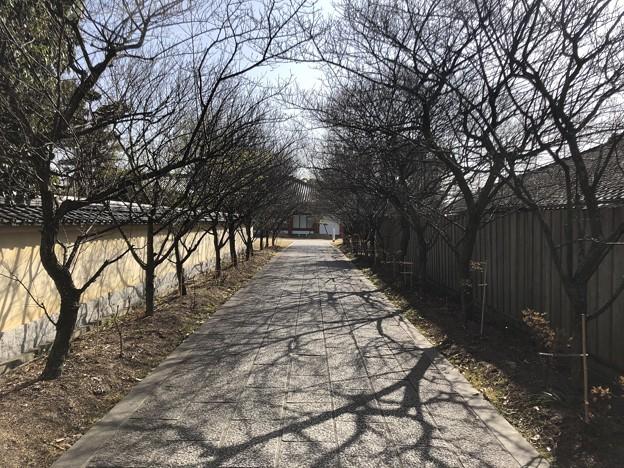 3月_薬師寺 h