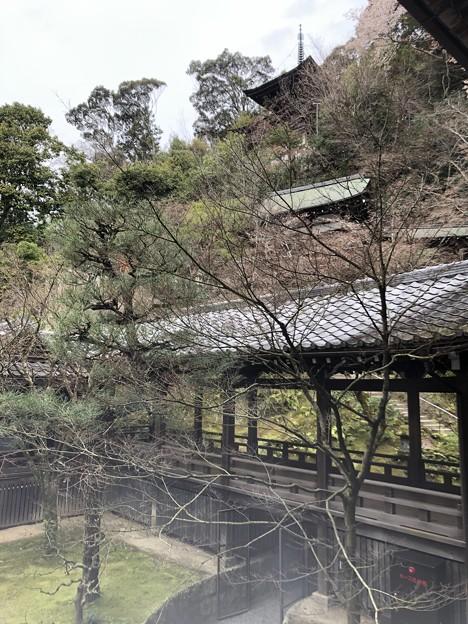 3月_永観堂 9