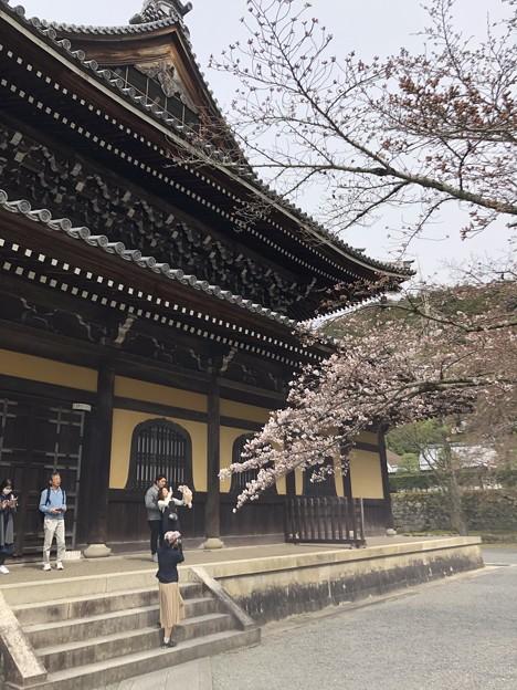 3月_南禅寺 8