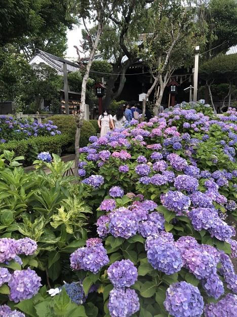 6月_白山神社 3