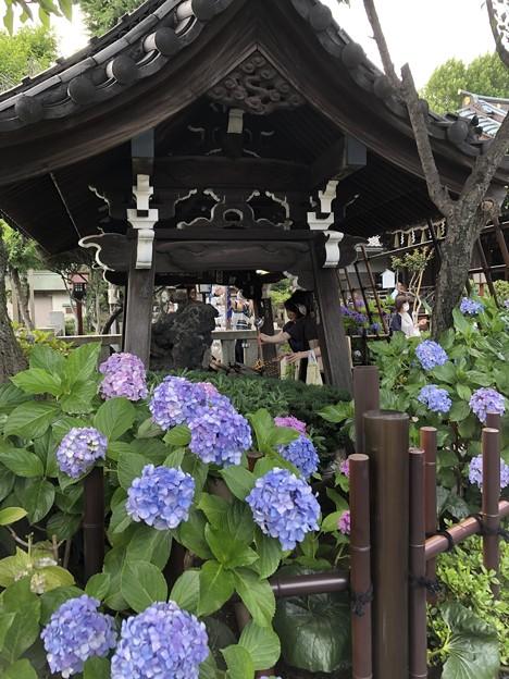 6月_白山神社 4