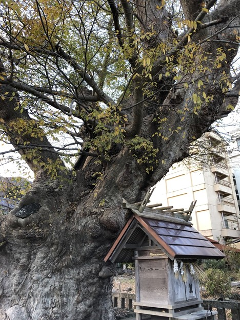 11月_住吉神社 2