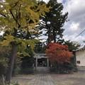 Photos: 11月_諏訪神社 1