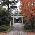 Photos: 11月_諏訪神社 2